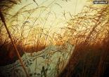 aziba   عکس زیبا