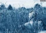 aziba | عکس زیبا