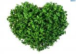 heart   قلب گیشنیز